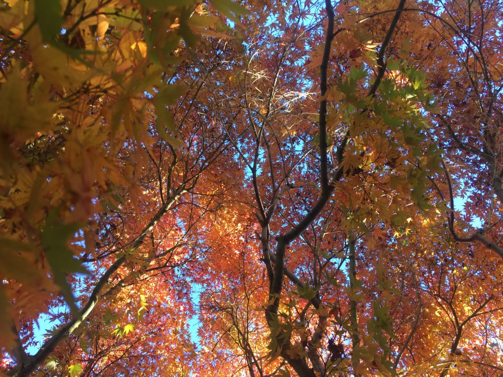 Looking Up at fall